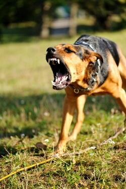 Dog Bite Lawyer Austin Texas
